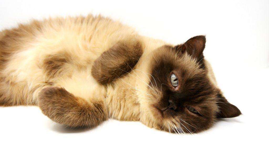 これは愛猫